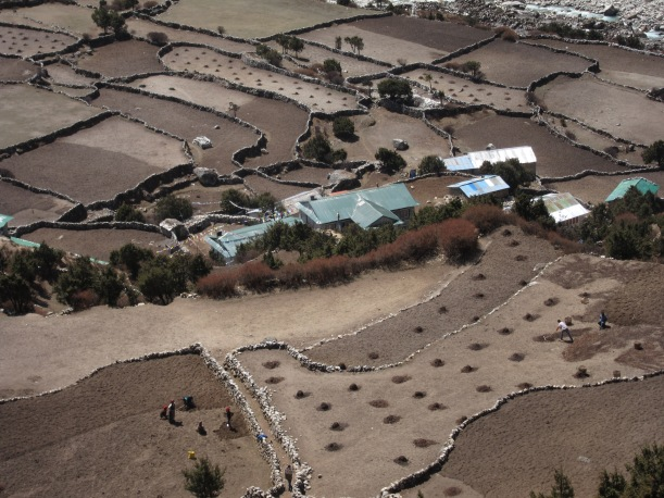 Spring planting of the potato fields in Pangboche.